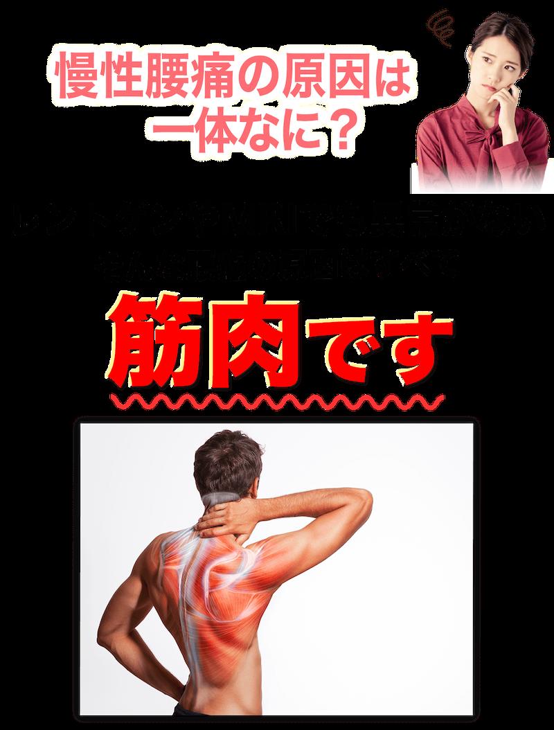 慢性腰痛の原因は一体なに?レントゲンでもMRIでも異常がないそんな腰痛の原因は全て筋肉です。